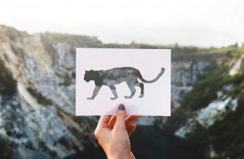 2018_leopard